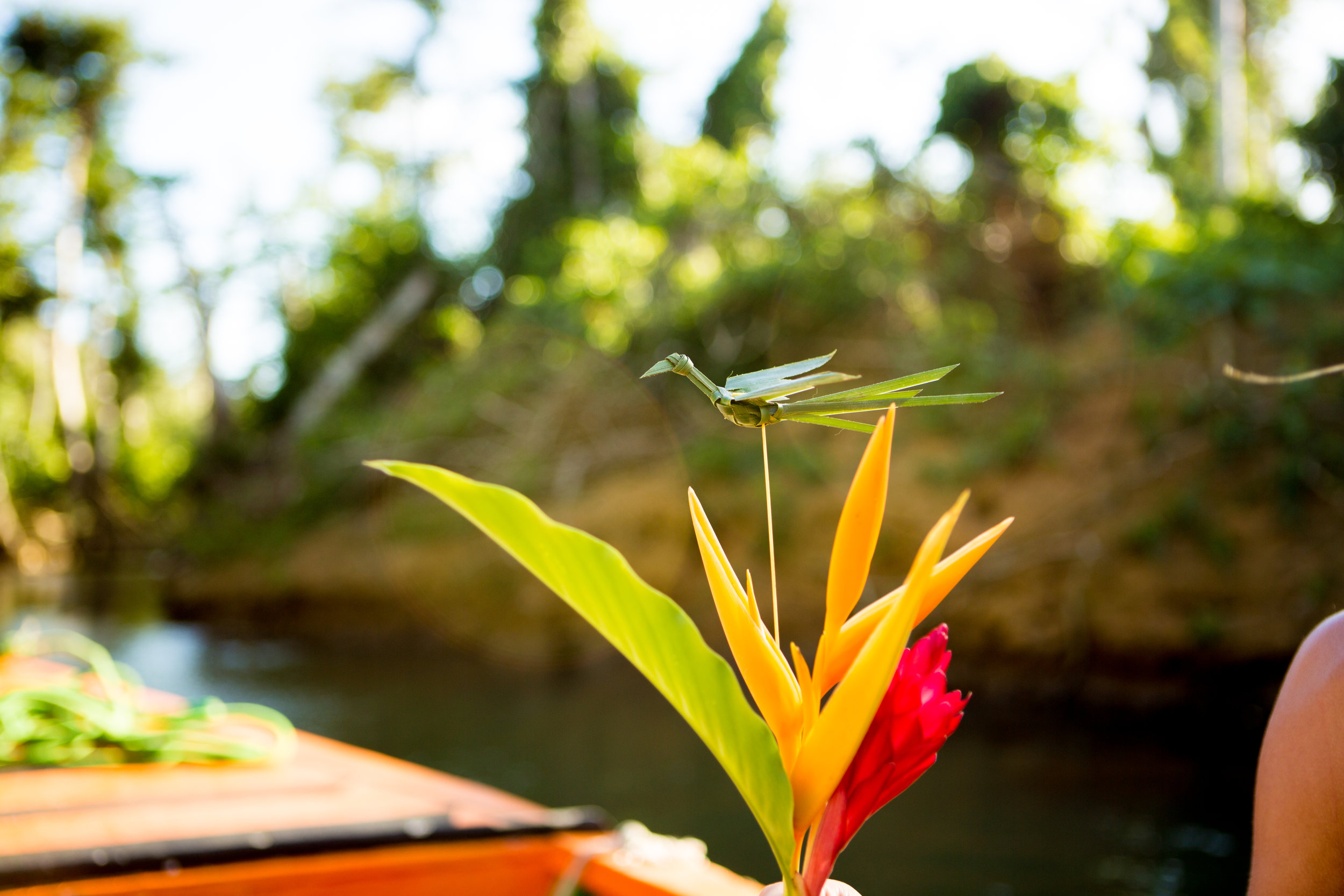 Dominica's Indian River Tour was a total unanticipated highlight of the trip, and a must-see activity for your train ashore on Dominica!