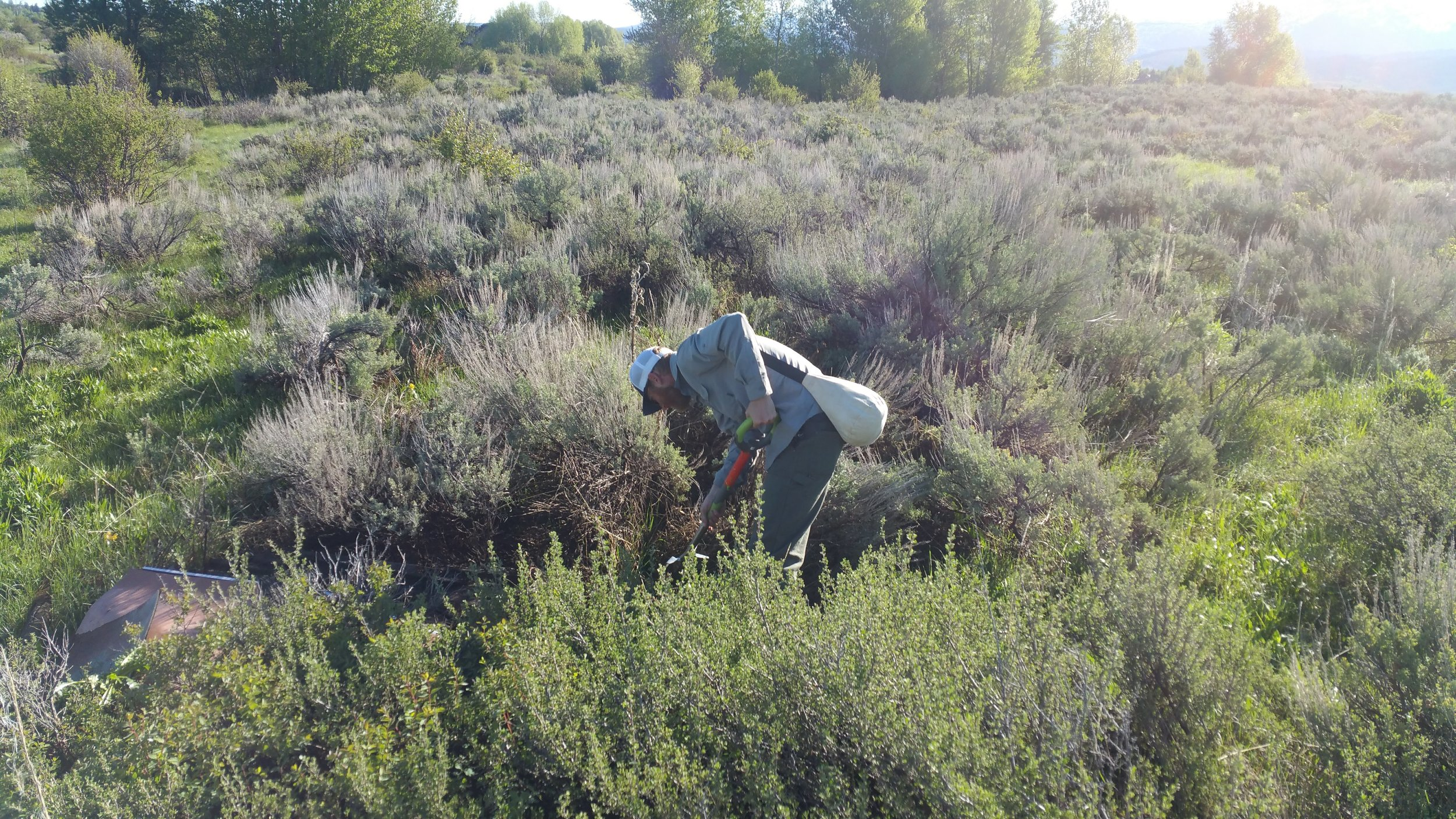 weed control service - weed removal in field