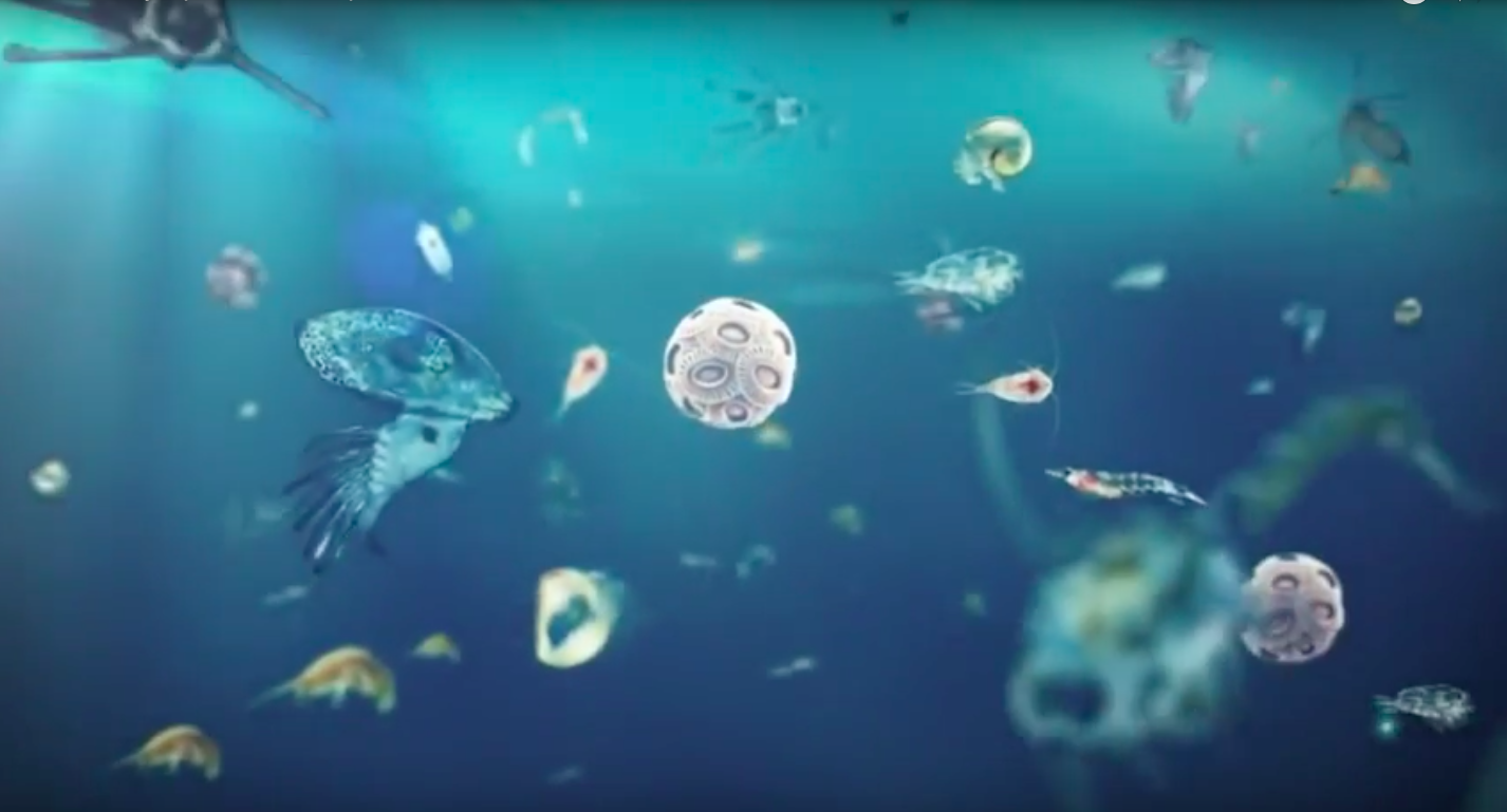 Illustration of marine phytoplankton (including coccolithophores) drifting in the ocean (organisms are not to scale). Image obtained from: https://www.youtube.com/watch?v=jsgCjgcp_6g