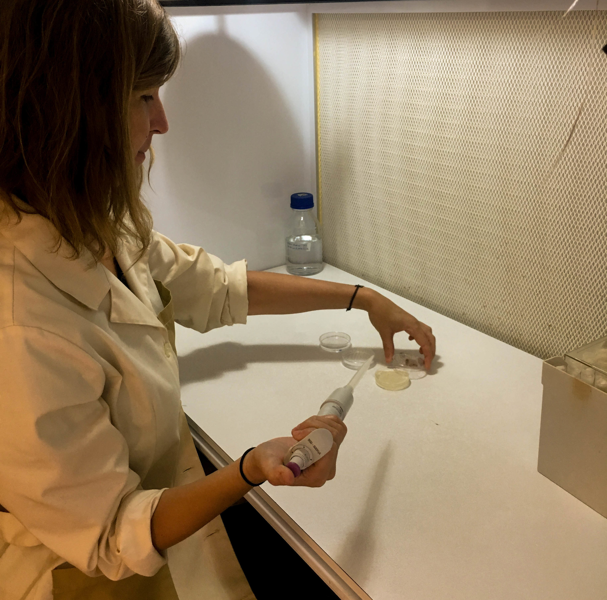 Catarina, doing her very first mono-culture of  Emiliana huxleyi  in the lab!