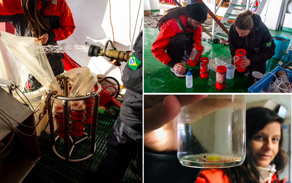 """Pic 2. Sampling of zooplankton with the """"MultiNet"""" system by Claus Inck and Vanessa Agostini (left and above), both FURG oceanographers. Sample of krill, by the hand of Camila Signori (Oceanographer, USP)."""