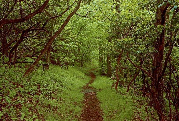 appalachian_trail1.jpeg