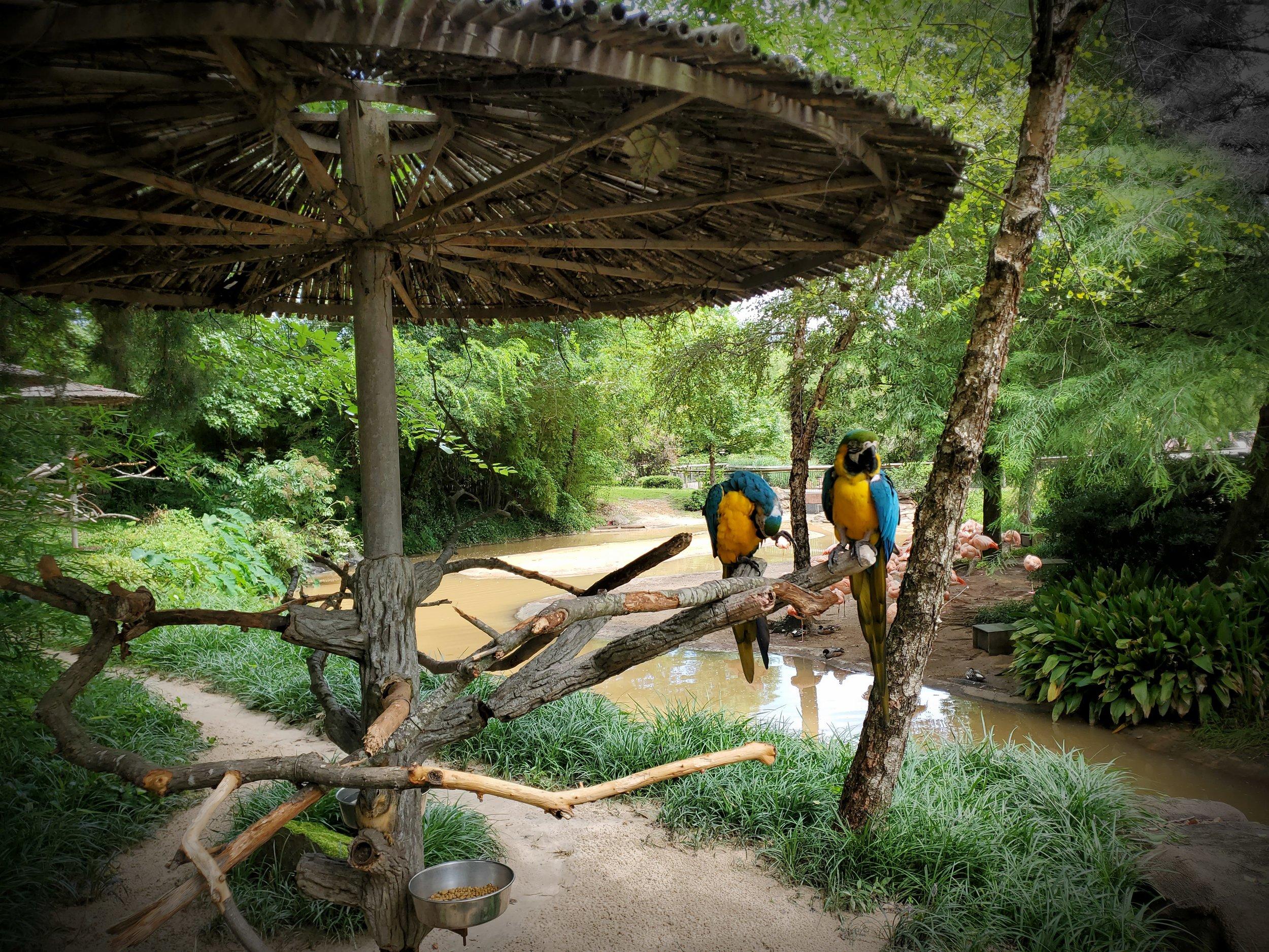 Bird gardens inside gate