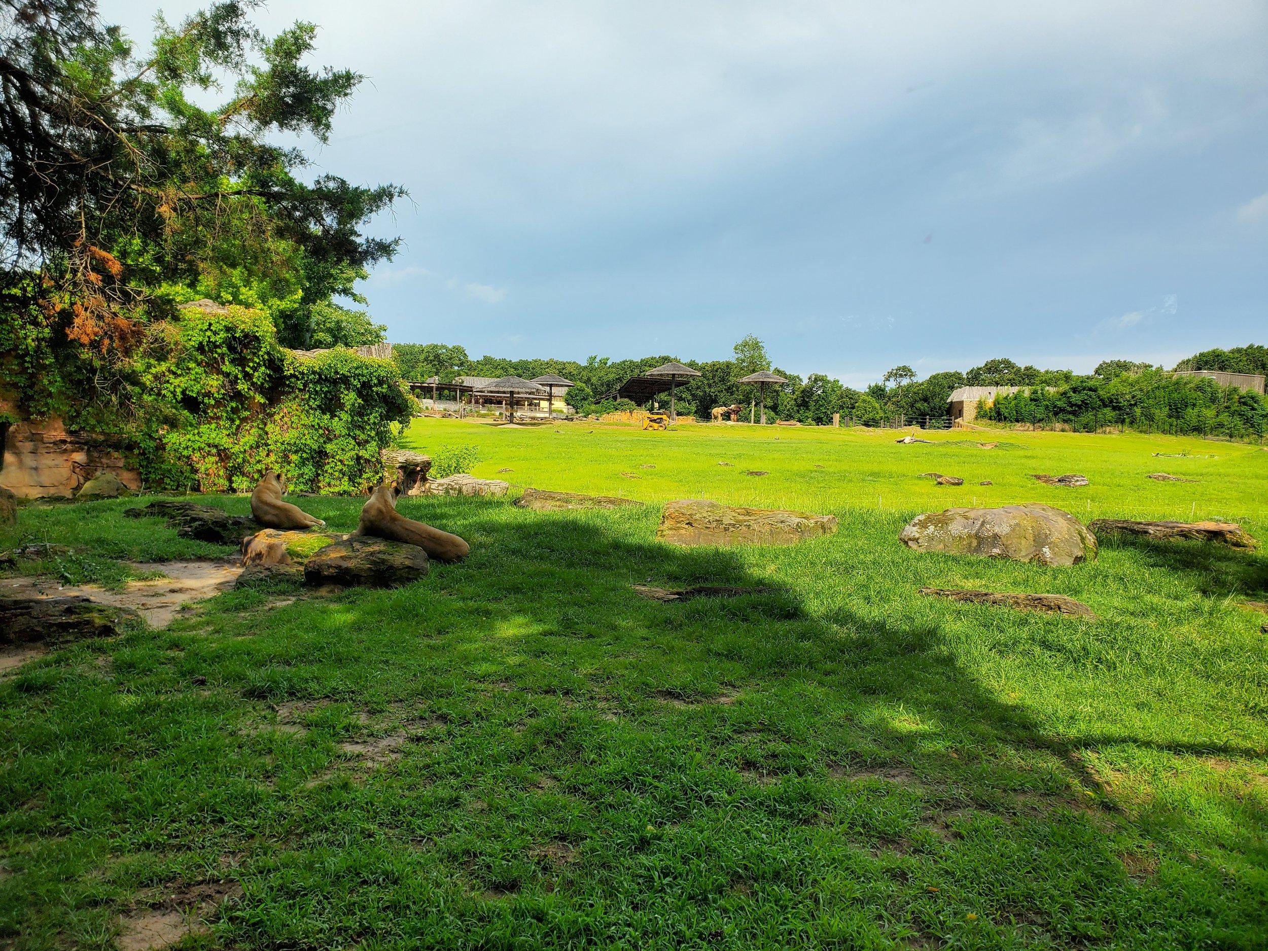 Lions overlooking savanna