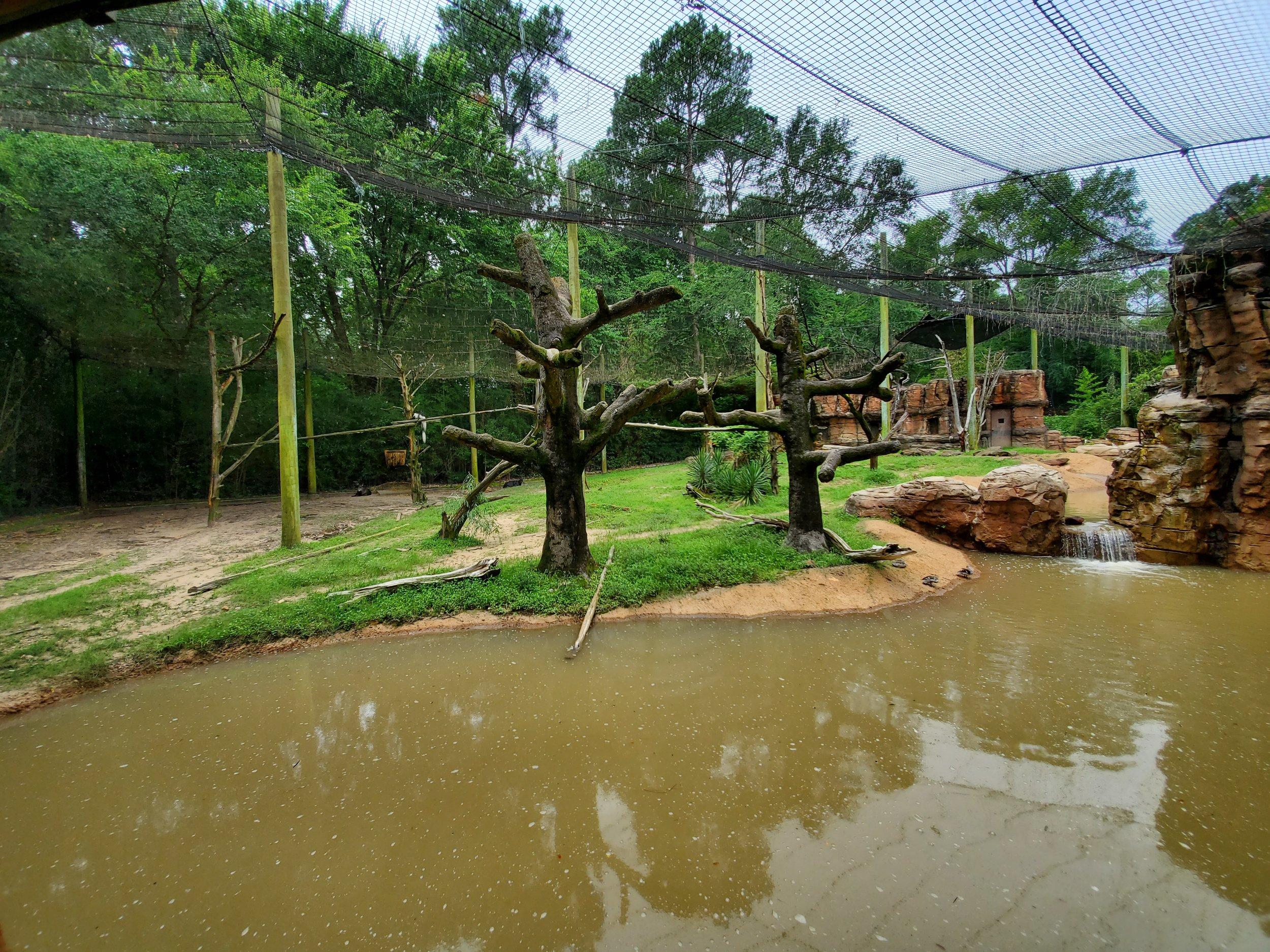 Huge mixed species colobus