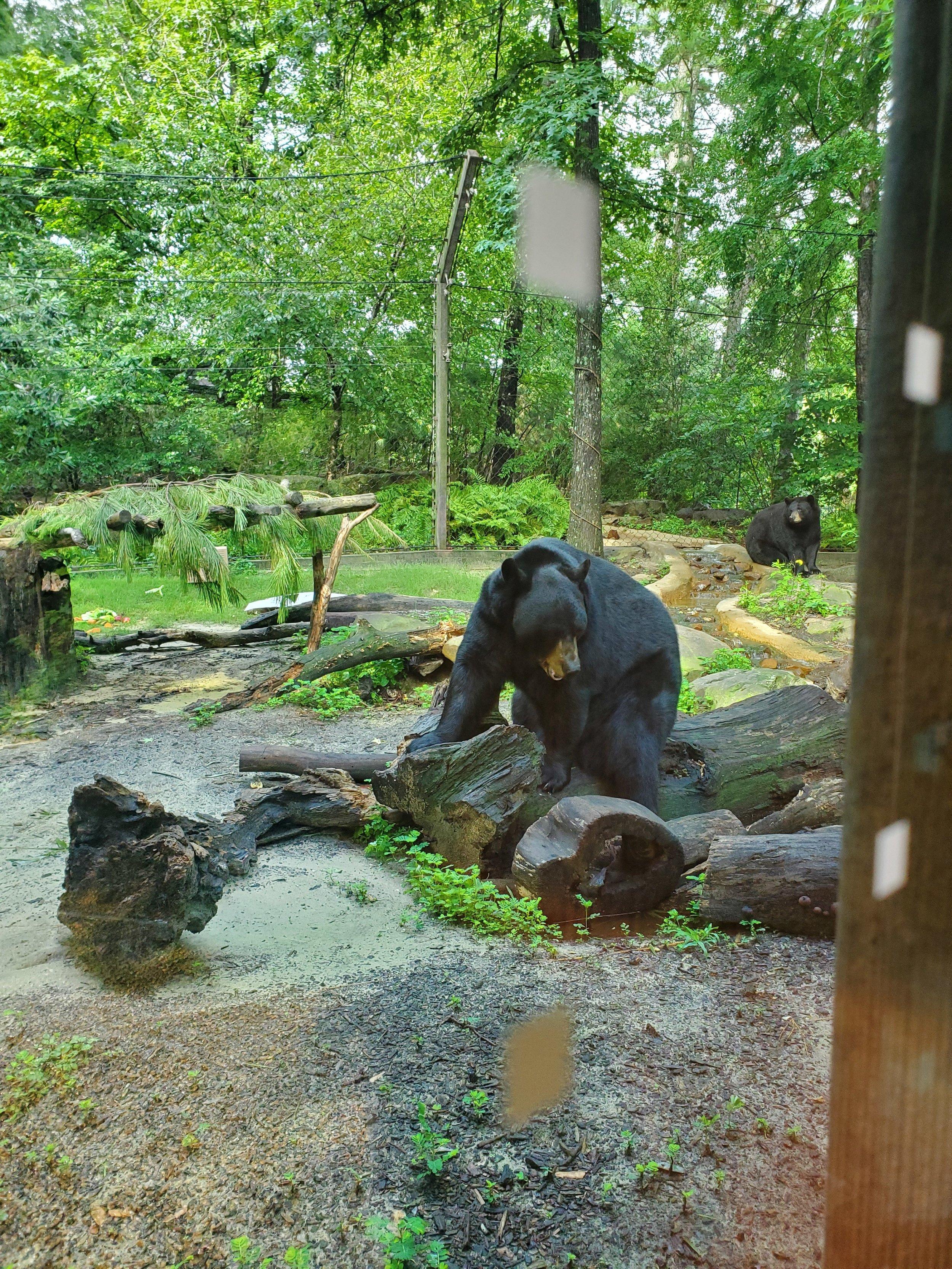Small black bear exhibit