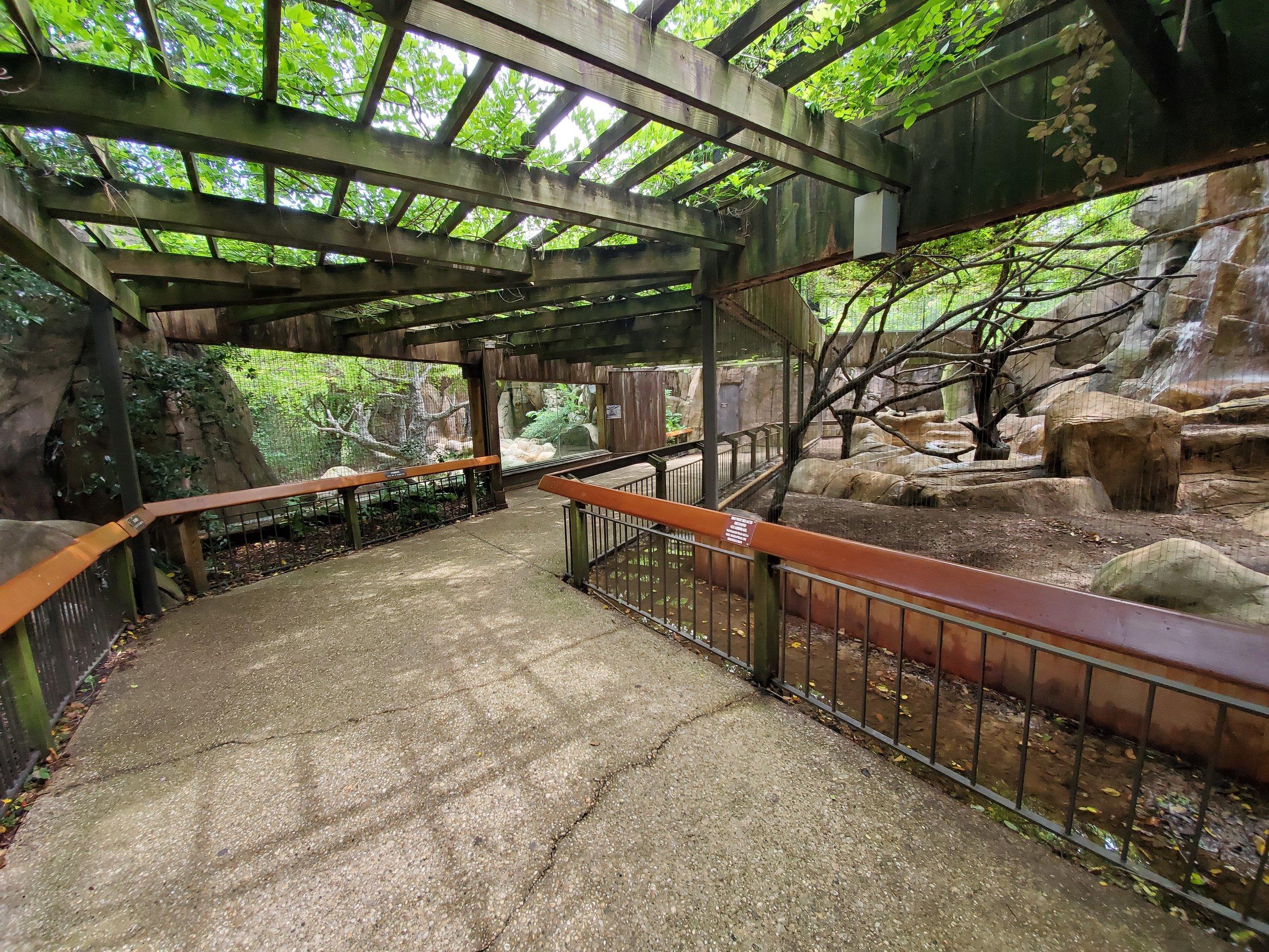Older mountain lion habitat