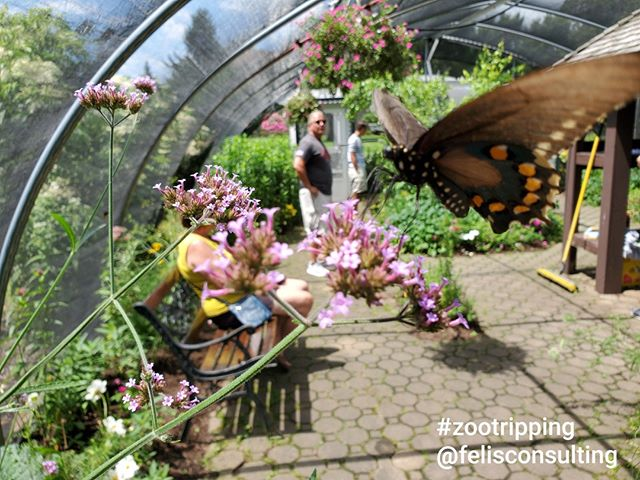New York State Zoo has a sweet little seasonal butterfly house. Guests came in, slowed down, and really enjoyed the garden and butterflies! Look at all those adults!⠀ ⠀ #smallandmighty #zoodesign #zootripping #nyzoo #zoo #butterflies #butterfly #gardens ⠀ @newyorkstatezoo