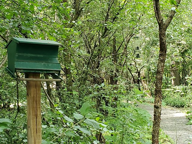 While the New York State Zoo is literally a walk in the woods, a short nature trail allows guests to observe native birds, drawn by multiple feeders. I've always wanted to implement something like this!⠀ ⠀ #smallandmighty #zoodesign #zootripping #nyzoo #zoo #nativebirds #forest #walkinthewoods #birdfeeder⠀ @newyorkstatezoo