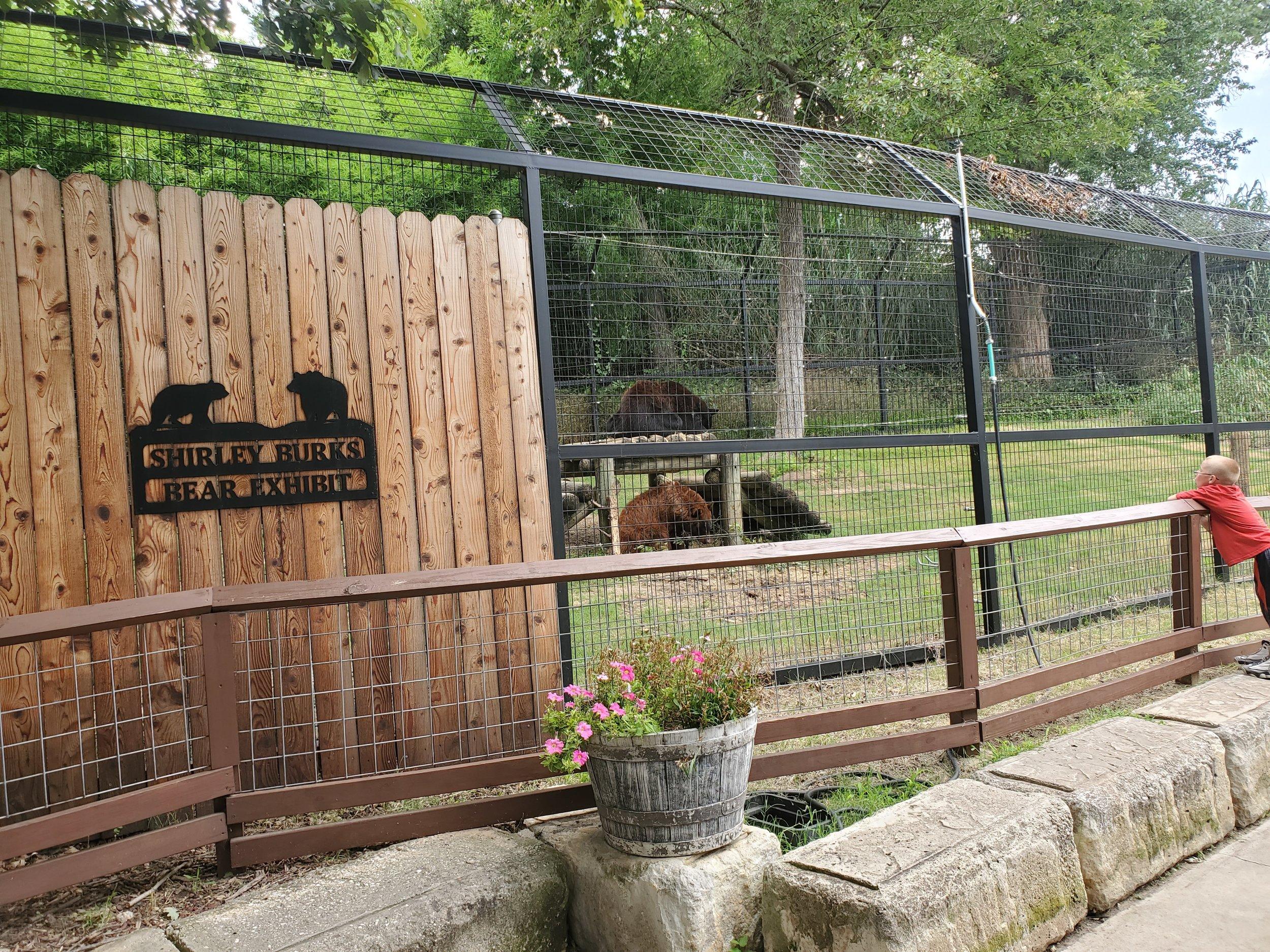 Black Bear habitat 1: grassy lawn