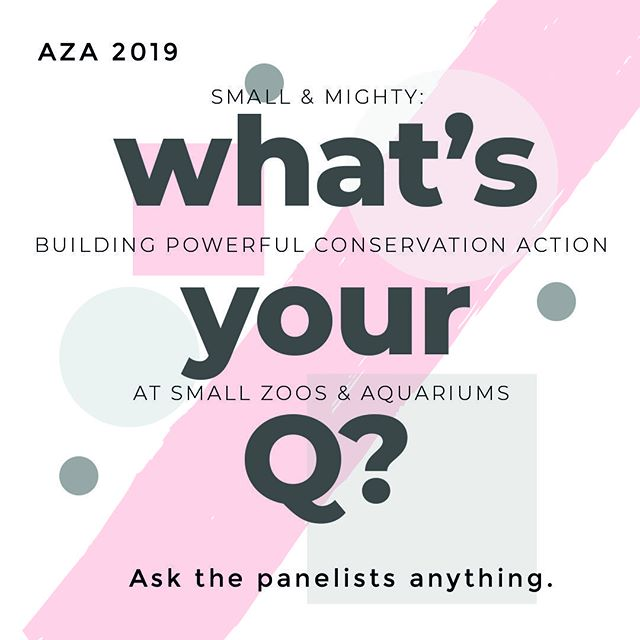 YOUR INPUT IS NEEDED!⠀ ⠀ Preparing for moderating the 2nd Q&A session focused on Small Zoos & Aquariums at the AZA Conference next month! ⠀ ⠀ This session is focused on the challenges and opportunities when creating conservation programs at small institutions. Our distinguished panel includes small zoos, accredited and not, and a small aquarium. Each has a unique perspective and have creative solutions and programs.⠀ ⠀ After each presents, we'll be asking the panel pre-curated questions as well as live questions from the audience. ⠀ ⠀ What's your most pressing question for the panel??⠀ ⠀ Bob Cisneros, Big Bear Alpine Zoo⠀ Sue Wahlgren, Cosley Zoo⠀ Ed Mastro, Cabrillo Marine Aquarium⠀ Gene Peacock, Zoo Boise⠀ ⠀ @zooboise @bigbearalpinezoo @cosleyzoo @cabrillomarineaquarium