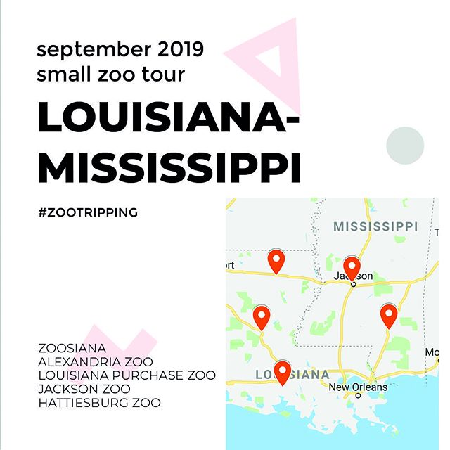 Next week! Felis Consulting is #Zootripping through LA & MS! Get ready for insights and observations from Alexandria Zoo, Louisiana Purchase Zoo, Jackson Zoo, Hattiesburg Zoo, and Zoosiana! ⠀ ⠀ #zootripping #southernzoos #mississippidelta #zoos #roadtrip #zoodesign #missississippi #louisiana #animals #design #zoofan #zoovisit⠀ @thealexandriazoo @louisianapurchasezoosociety @jacksonzoo @hattiesburgzoo @zoofan