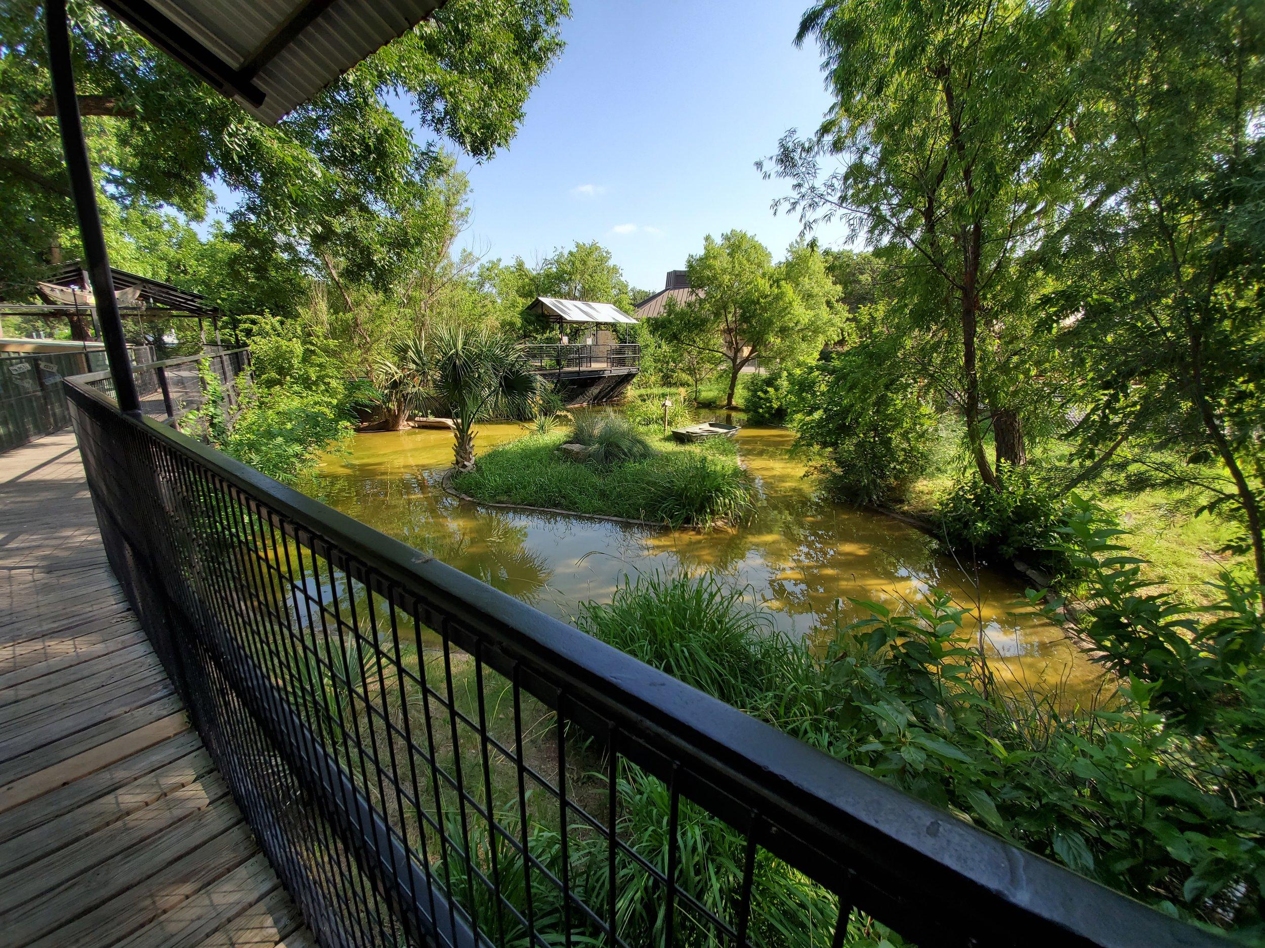 Huge habitat for gator
