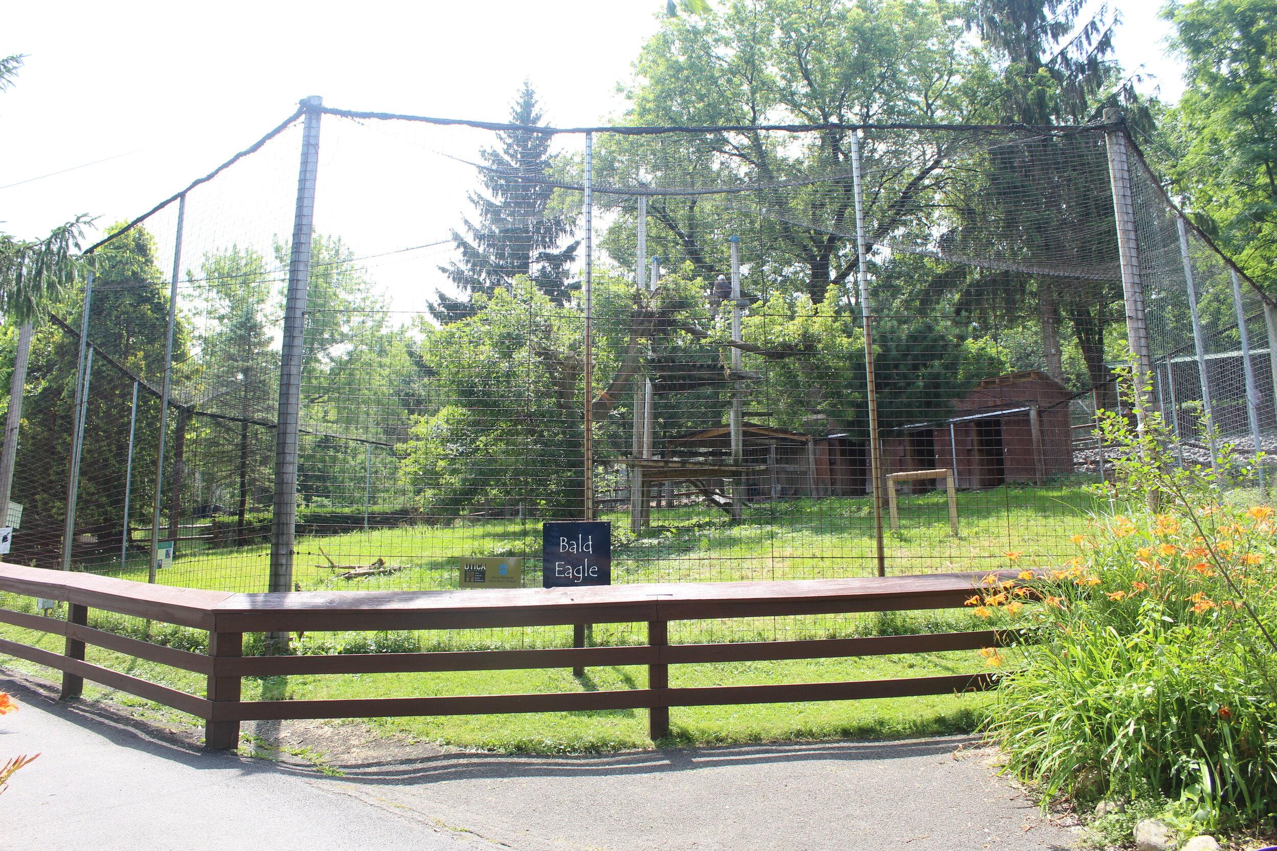 Eagle habitat