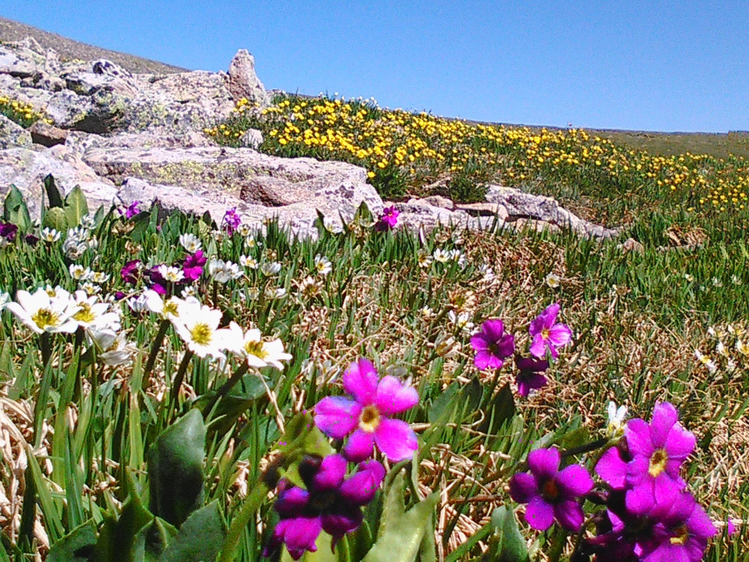 WIldflowers Rocks.jpg