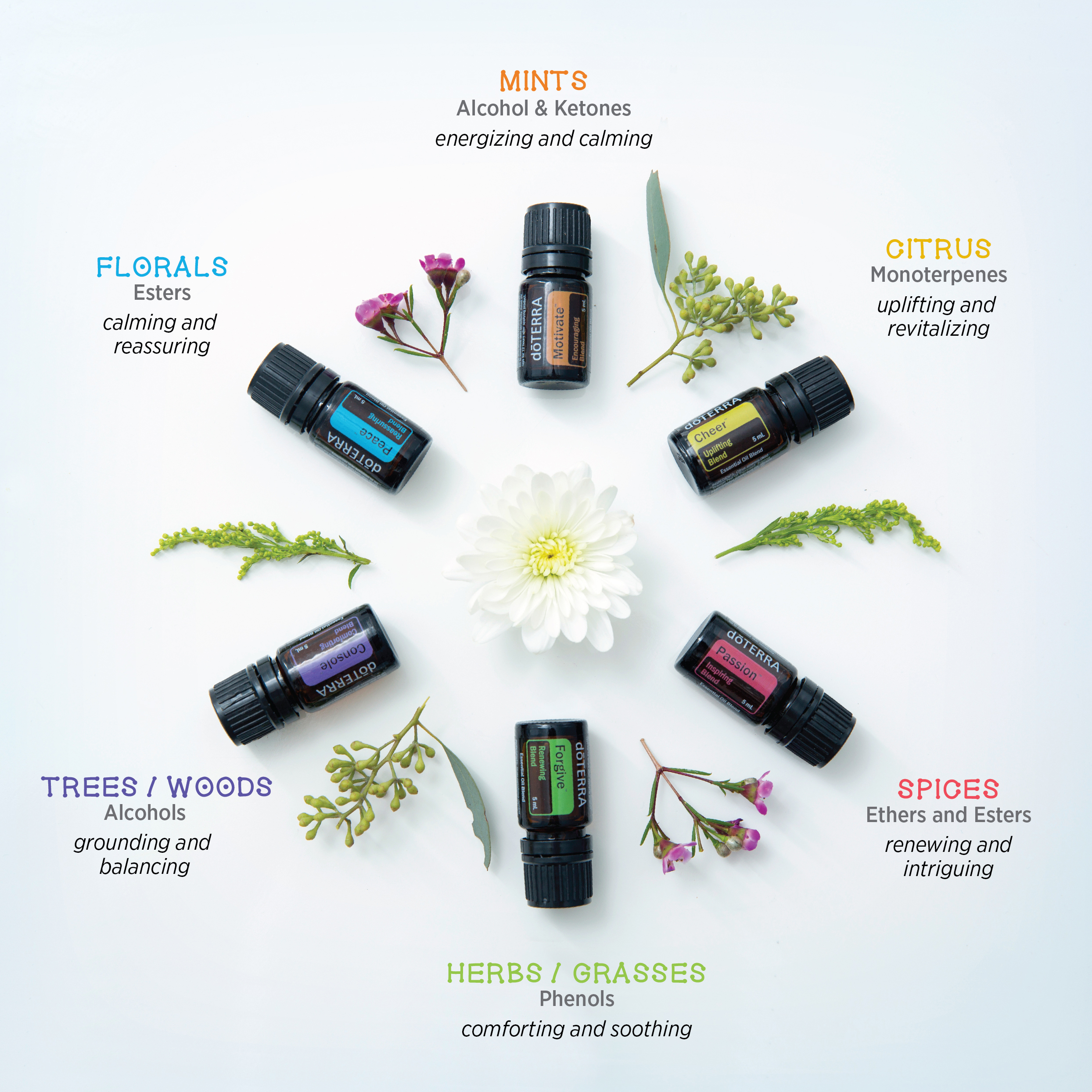 aromatherapy-infographic.jpg