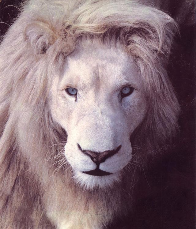 White-Lion---King-of-Kings.jpg