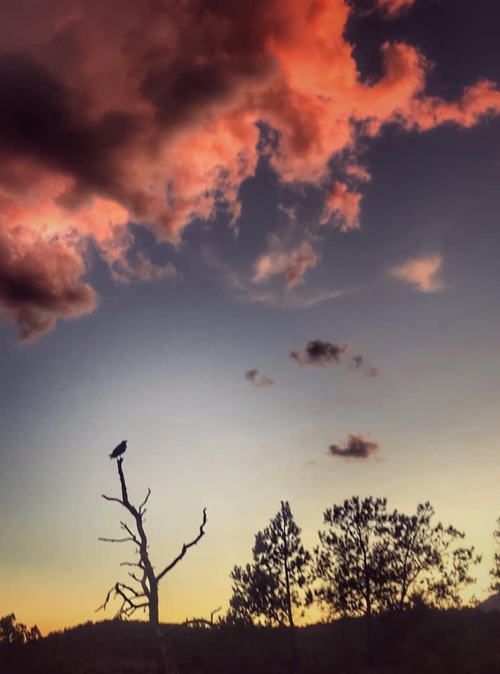desert raven.jpg