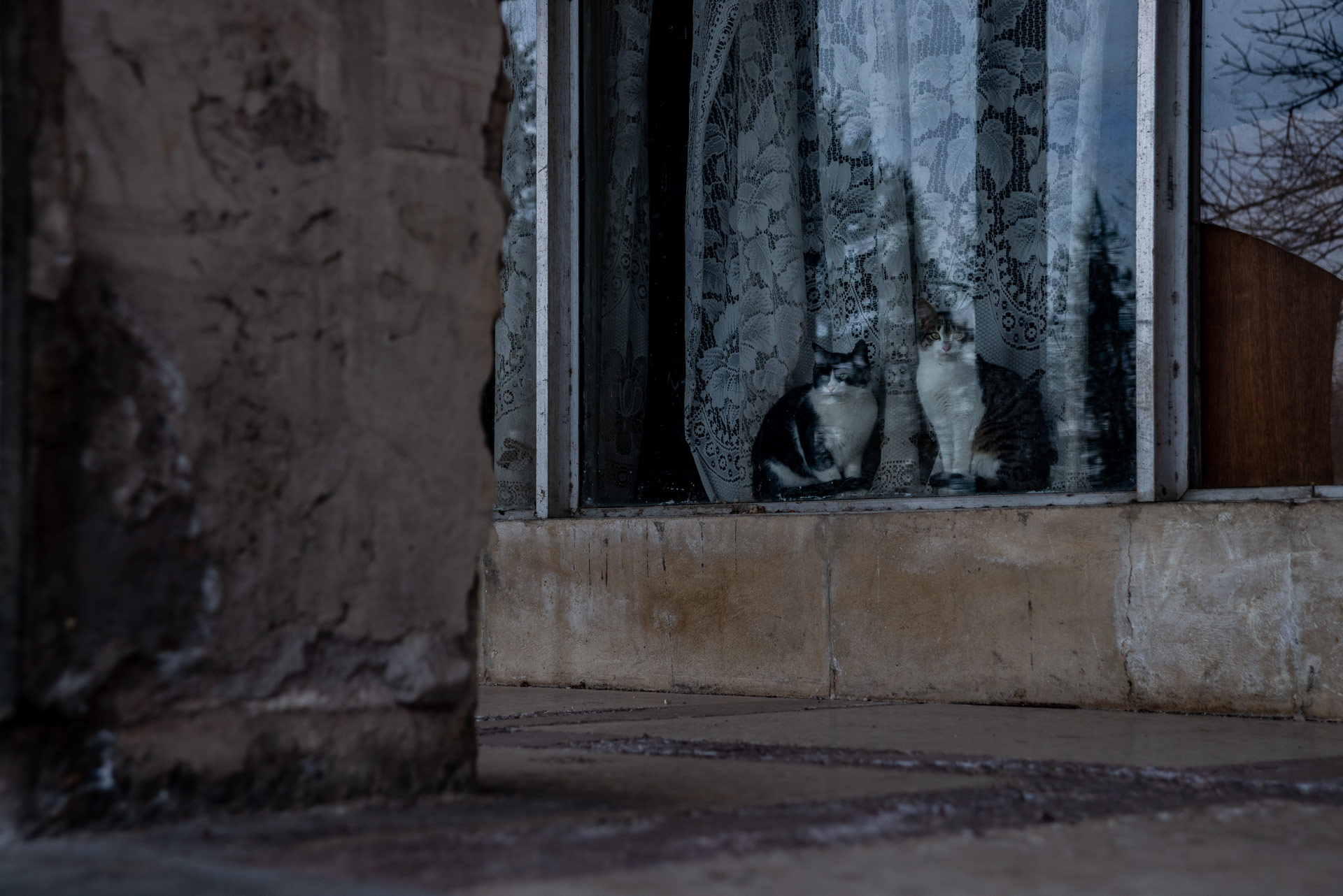 Two cats looking melancholically outside of the window in an abandoned sanatorium.