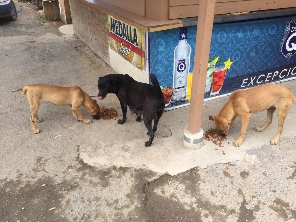Some of our outreach includes feeding stray and starving animals on the street.