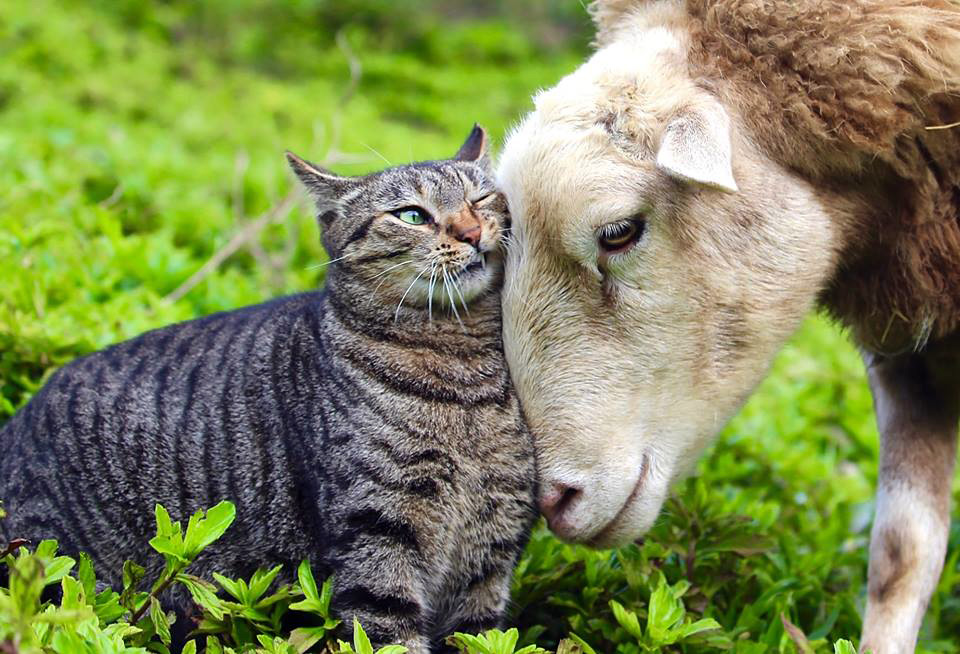 Interspecies Friendship. Photo courtesy of Laurelee Blanchard, Founder, Leilani Farm Sanctuary.