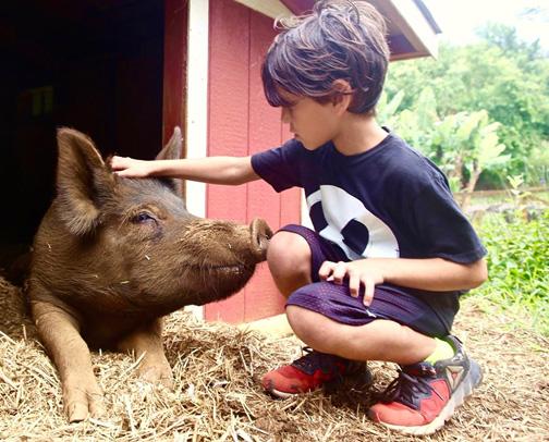 Photo from Leilani Farm Sanctuary.
