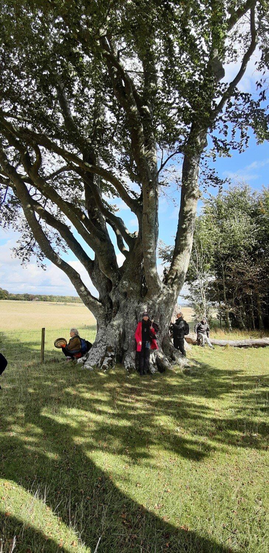kings-barrows-trees