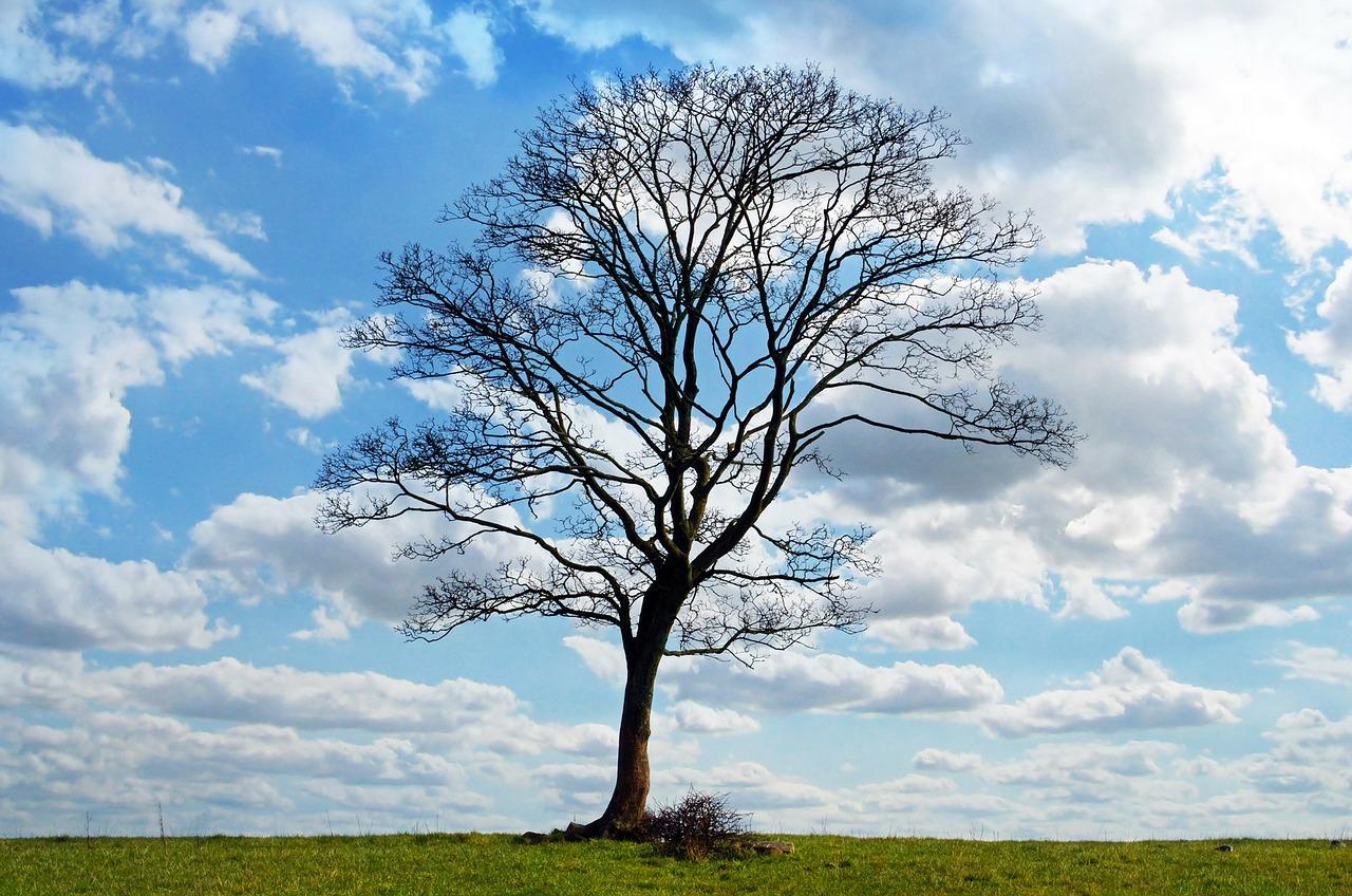 tree-164915_1280.jpg
