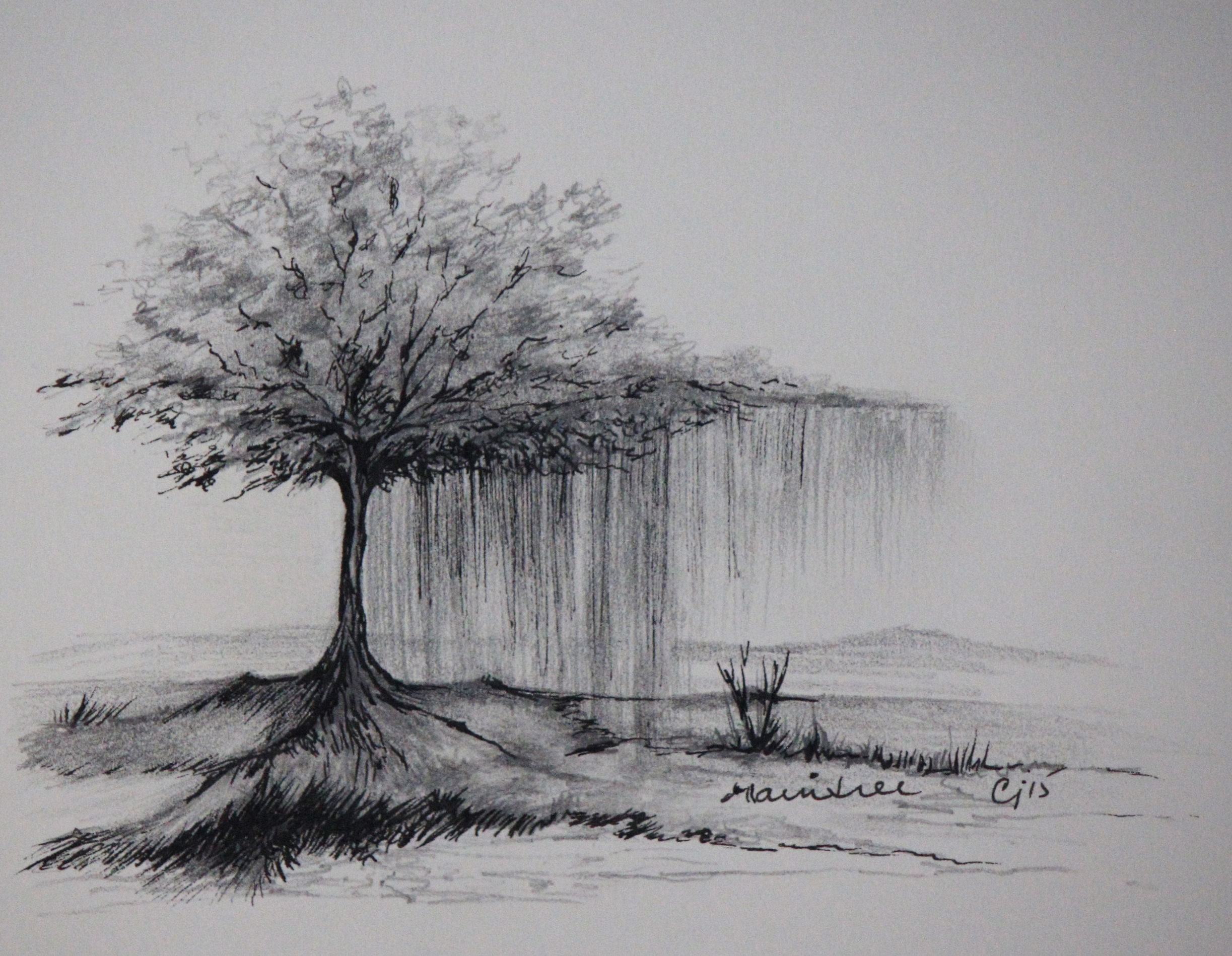 """""""Rain Tree""""   8x8"""" framed  graphite and ink on paper  $225 CAD  2015"""