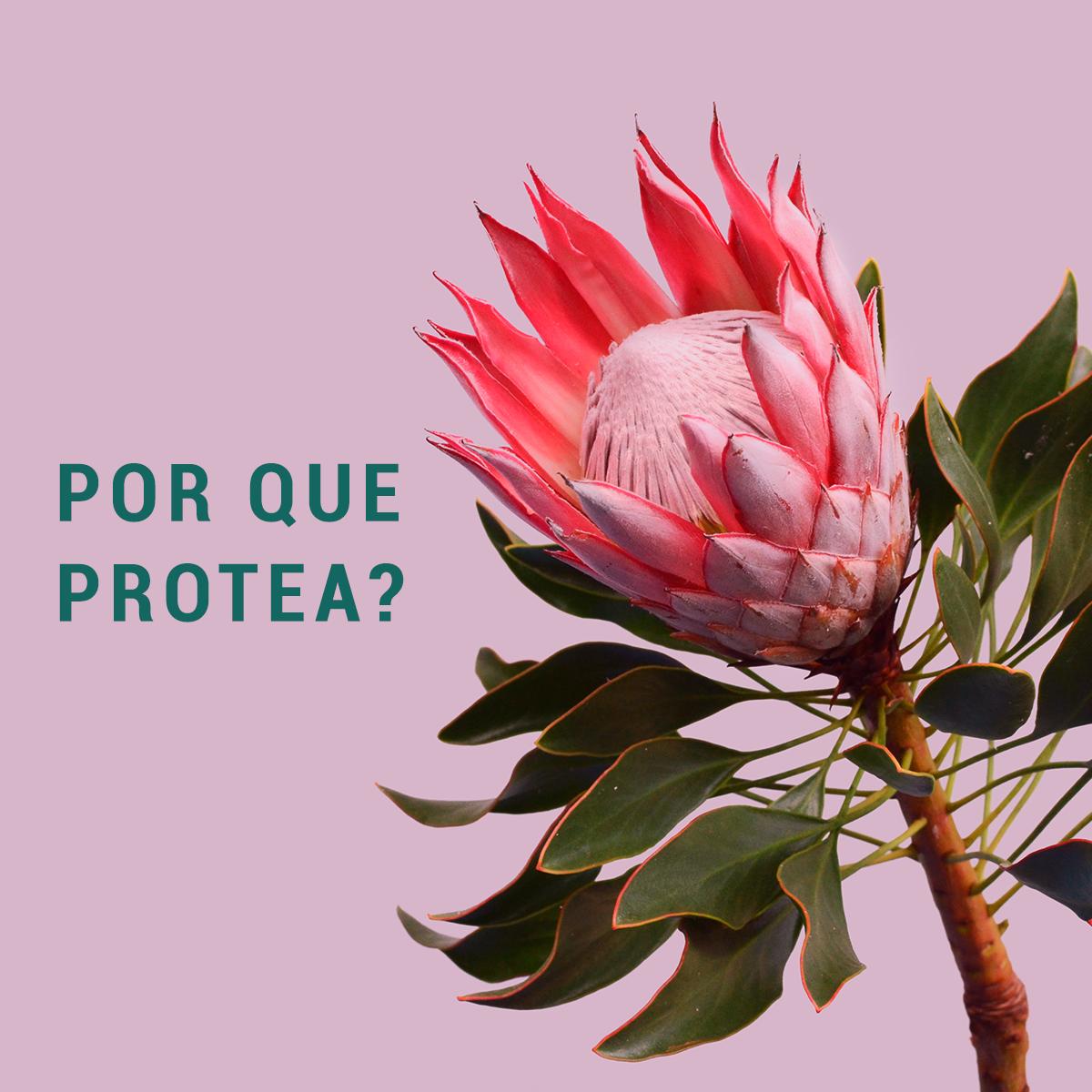 PQ PROTEA.png
