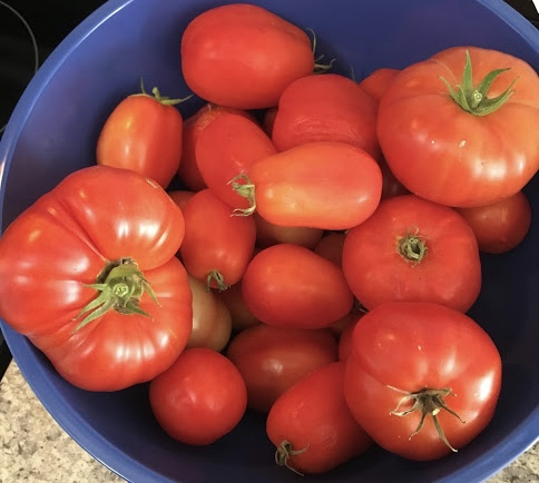 Our first harvest of tomatoes. Hybrid Romas and Beefsteak