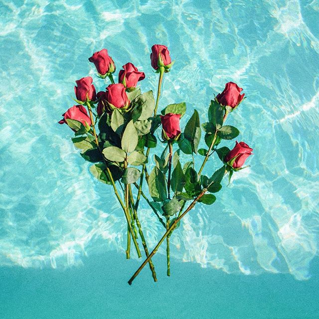 Roses are red, swimming pools are blue & all summer long, we're diving in to get to know our handpicked ingredients too! Hit the link in our bio to read why rose makes us feel fantastic, outside the bouquet. . . . . #unwind #relax #recharge #renew #refresh #thedoseco #dosedivas #wednesday #humpday #summer #summertime #cbd #cbdcommunity  #wellness #destress #happy #hemp #chillout #rose #plants #plantbased #floral #pink #roses #photooftheday #flowerstagram #instagood #flowersofinstagram #photo #photography
