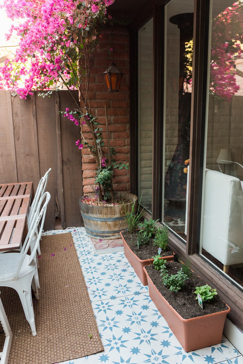 Urban Gardening | The Whitefeather Journal