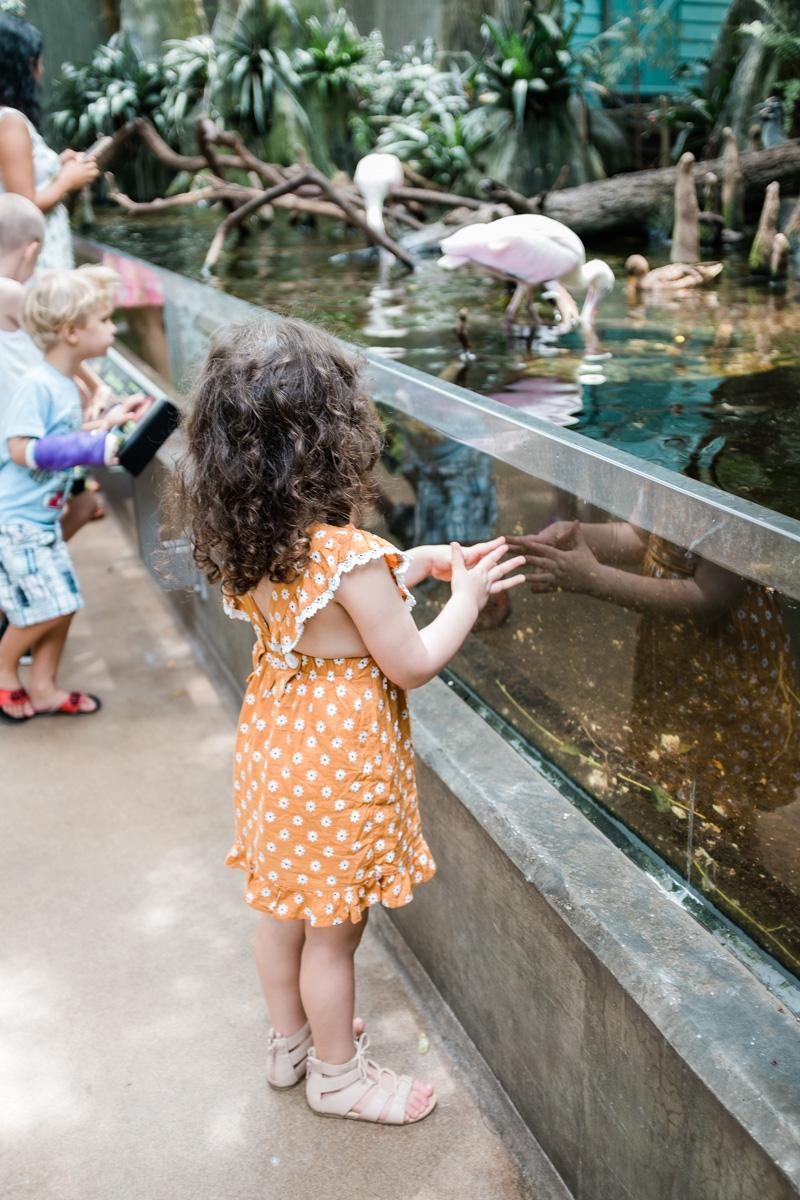 The Florida Aquarium | The Whitefeather Journal