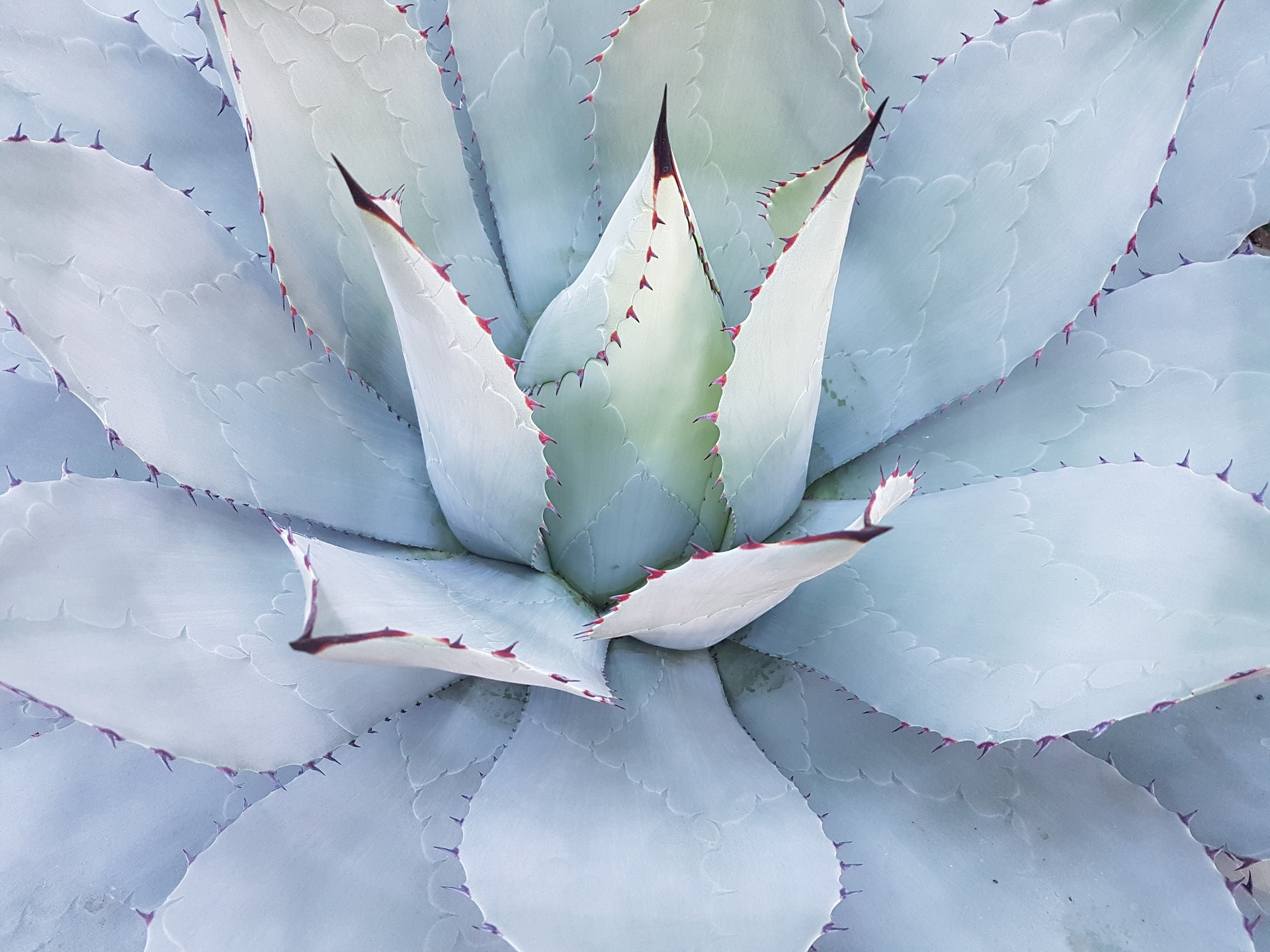 cactus-1750940_1920.jpg