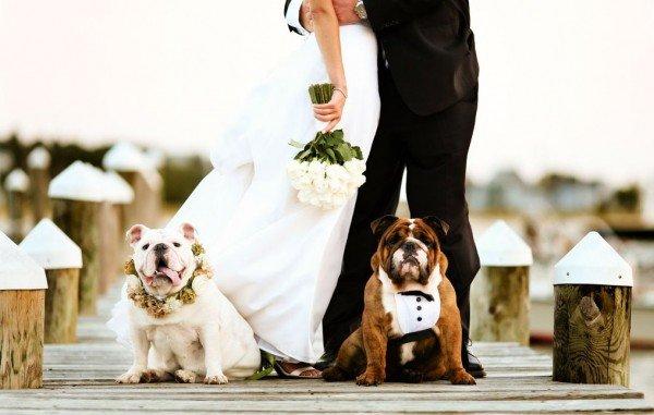 Credit: https://www.bridalguide.com/blogs/bridal-buzz/pets-in-weddings
