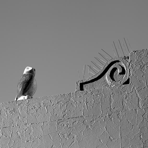 birdscarer.jpg