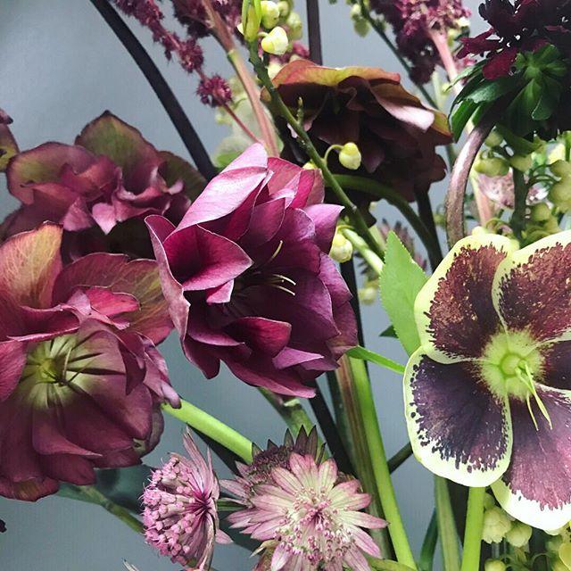 Hellebore close up. . . . . #flowersofinstagram #nycflorist #nyfloraldesigner #hellebore