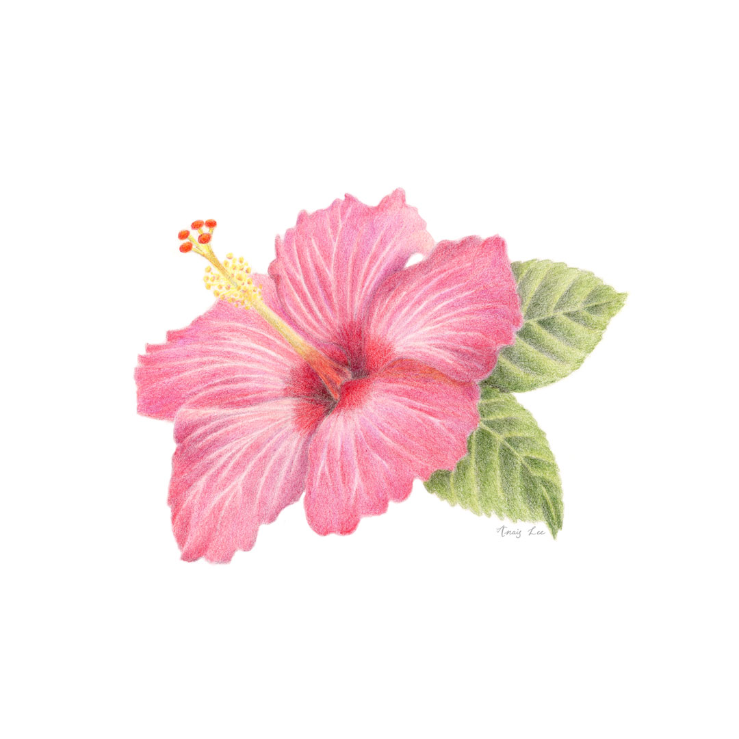 2019-02-22_hibiscus.jpg