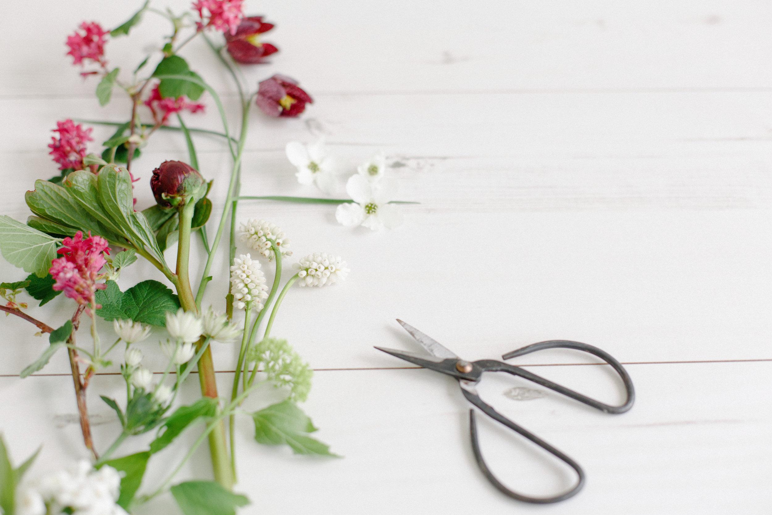 claire-graham-flower-photography-workshop-1.jpg