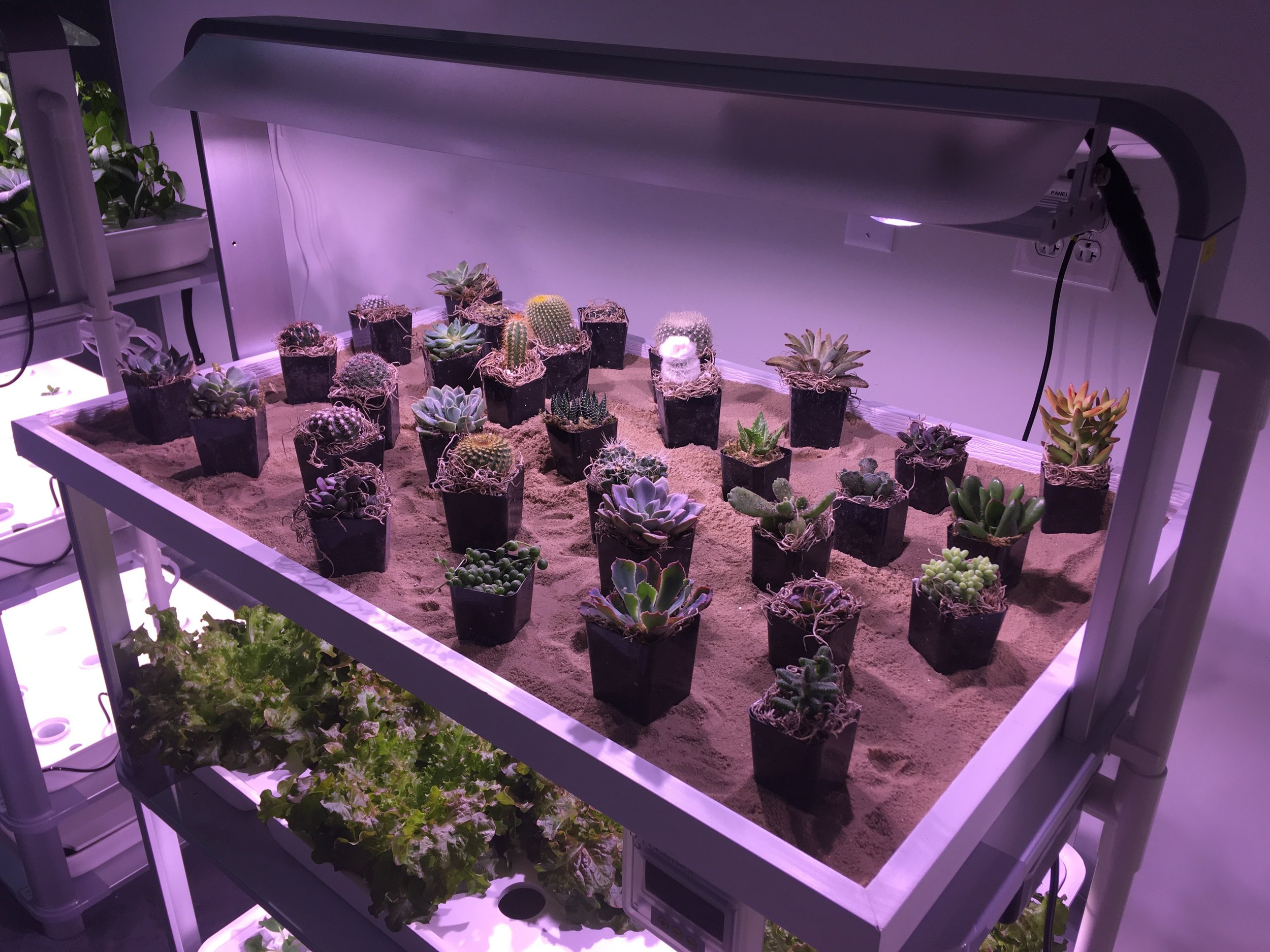 Hydroponic growing is only one aspect of the LF-ONE. The Full-spectrum lighting promotes excellent growth in all types of plants. Here we see cacti and succulents thriving.