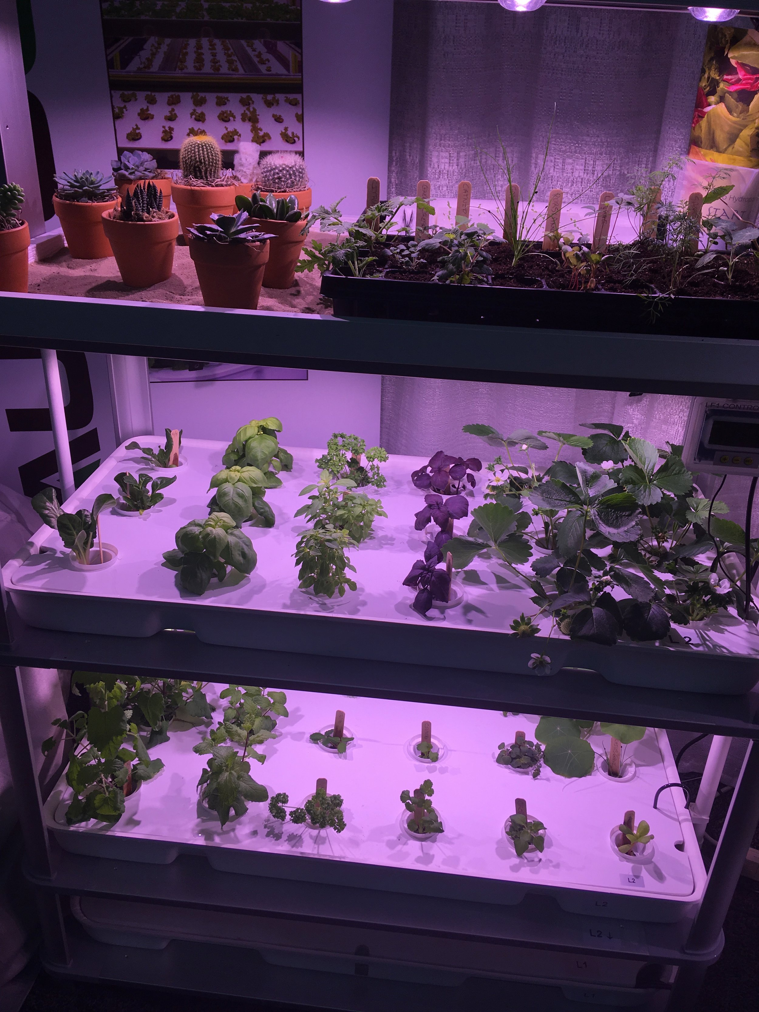 Hydroponic and Geoponic thriving together in the LF-ONE.