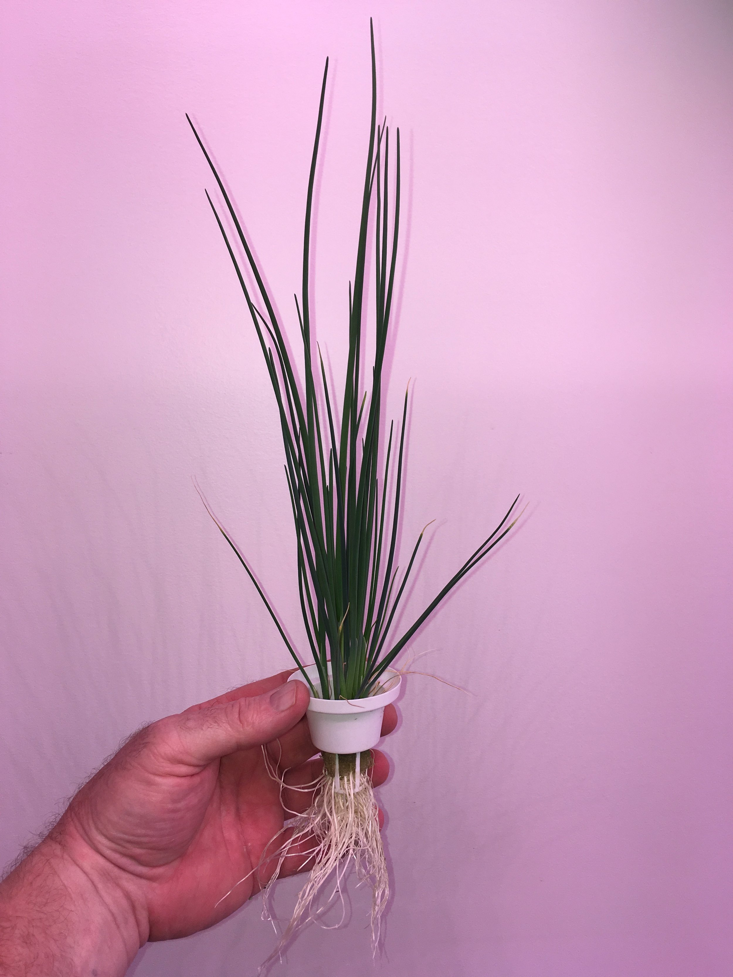 Chives on the LF-ONE.