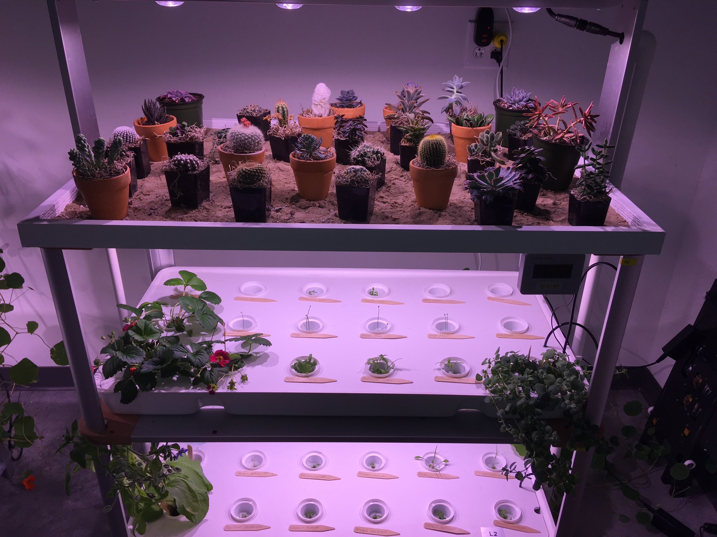 LF-ONE with the optional Geoponic tray growing cactus and succulents while the bottom two trays are growing various plants hydroponically. The quintessential juxtaposition!