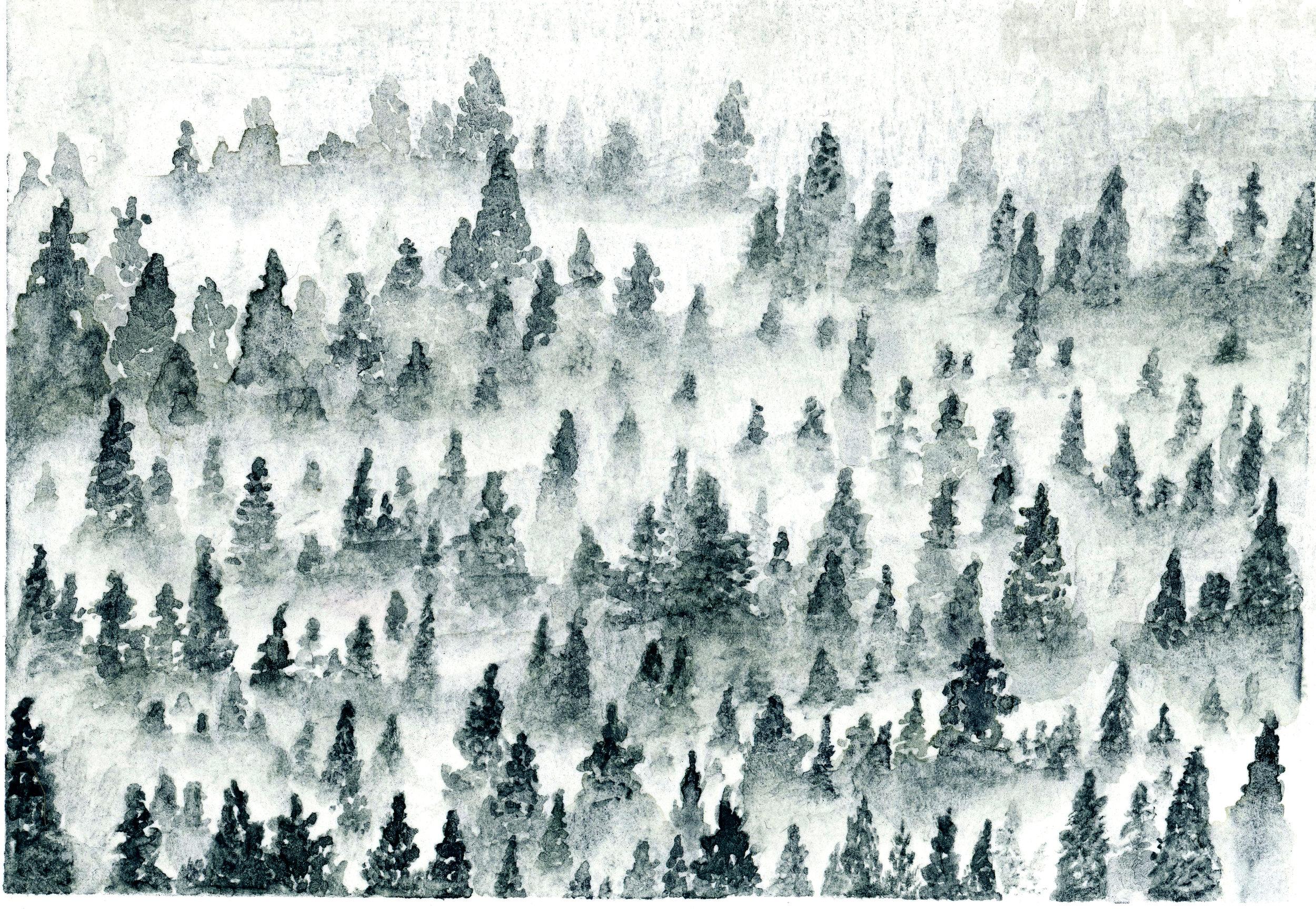 forest fire001.jpg