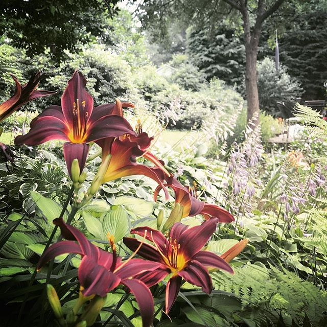 Feelin like I landed in an okay spot. #backyardvibes #daylillies #onemonthin #ithaca