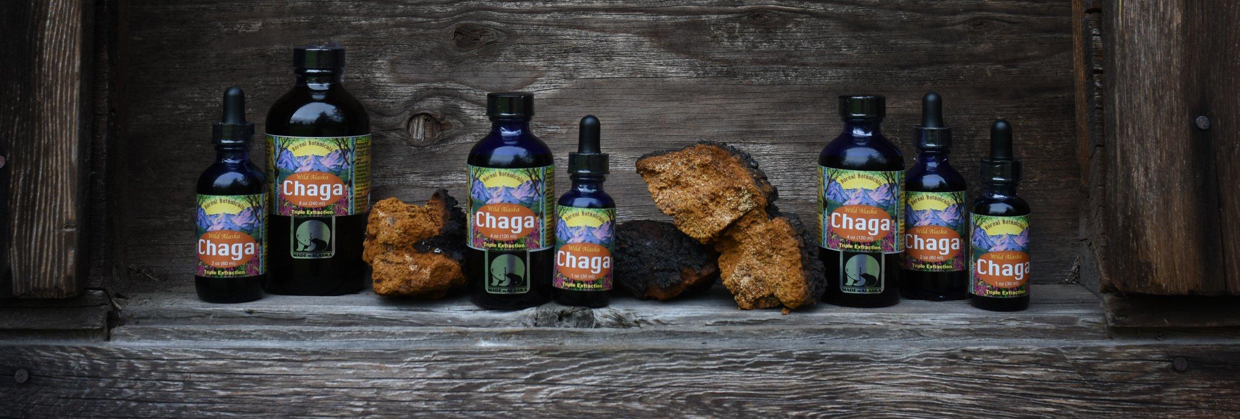 Chaga Extract - Triple Extraction