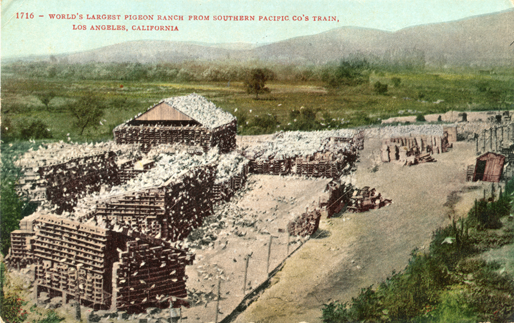 14. Postcard showing the view of pigeon farm from the train