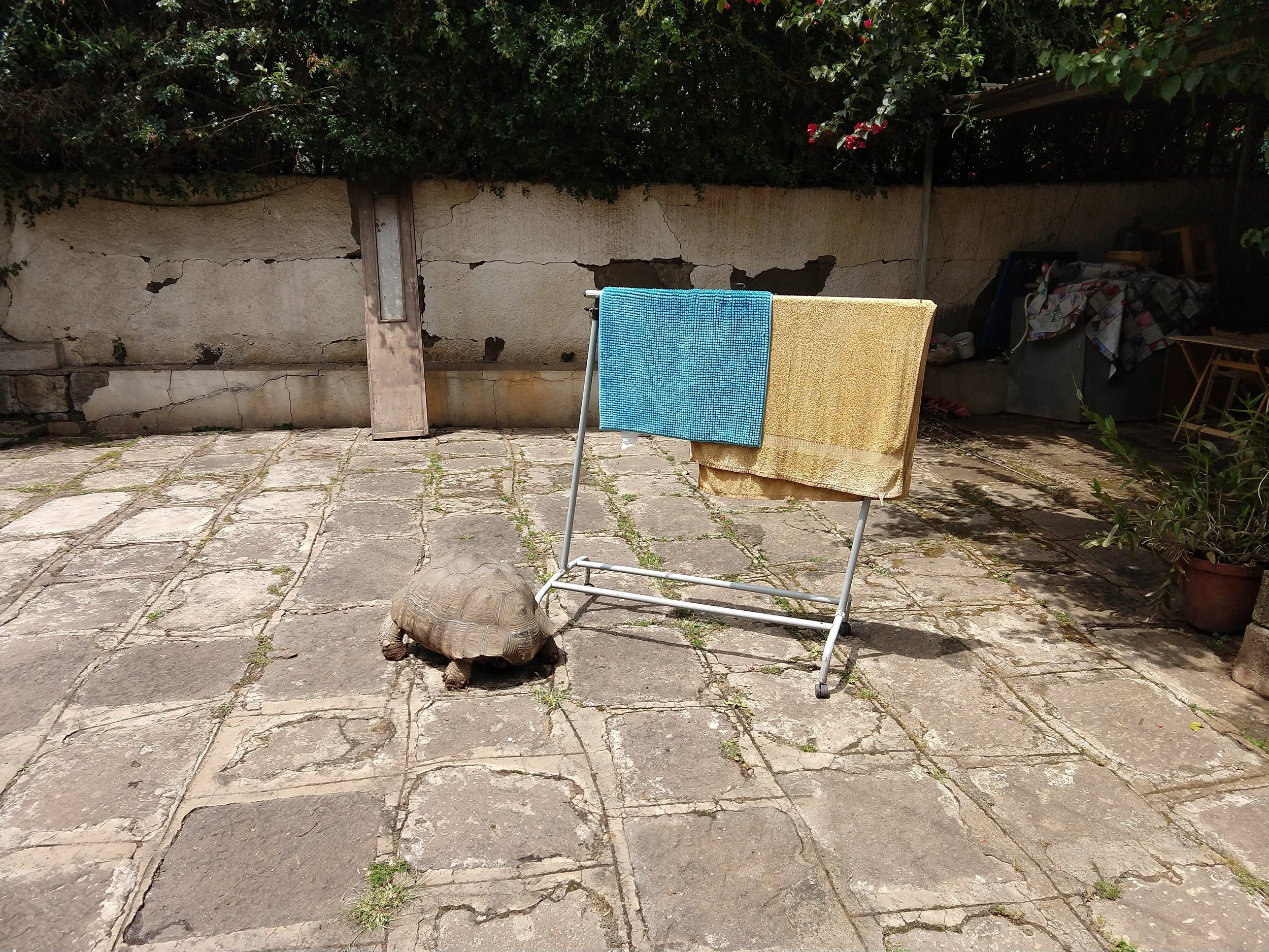 During my second stay, I got more exposure to Ethiopia's Italian history, thanks to my expat host. (Shown here: a turtle in her courtyard.) I even attended a jazz concert featuring an Italian quartet, organized through a local cultural institute.