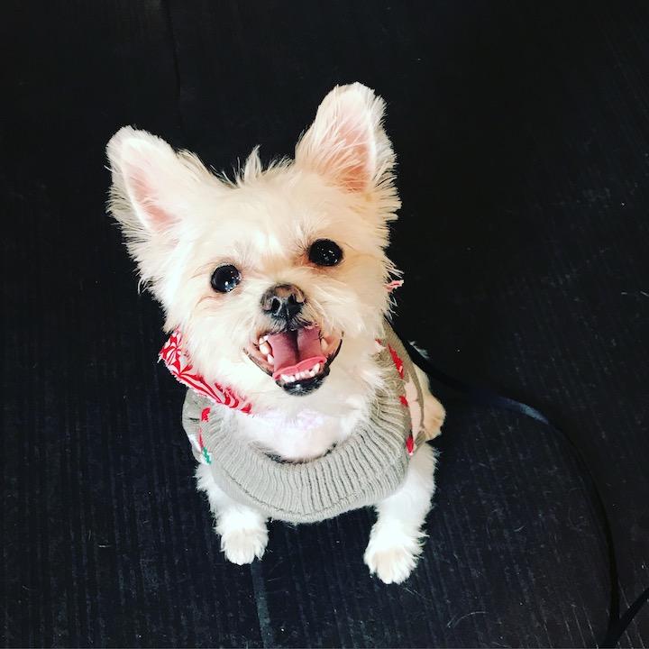 dog grooming nyc influencer.jpg
